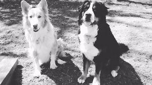 Pet companion Kitchener / Waterloo Kitchener Area image 1