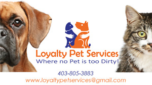 Pet Grooming in Airdrie and Coventry Hills