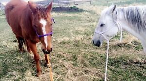 2 horses for sale