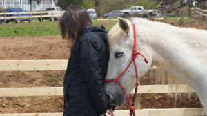 Equine Assisted Learning - Changing Lives Through Horses