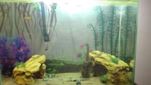 40 gallon fish tank full set up