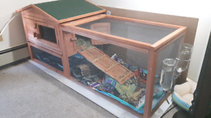 2 bonded guinea pigs and their awesome enclosure