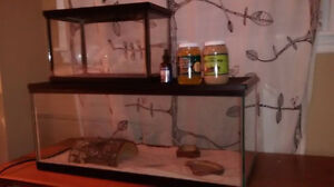 large reptile tank and small cricket tank