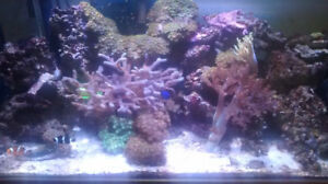 Salt water Aquarium - Reef fish tank