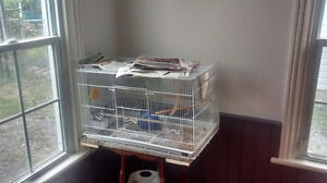 Zebra Finch and flight cage