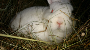 Rabbit's looking for furever homes