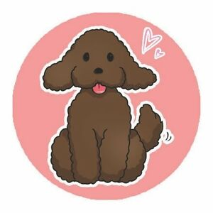 ***ADOPTION PENDING***Miniature Poodle needs new home