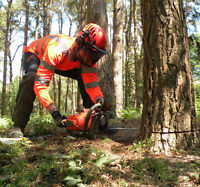 Tree Removal (Cutting, Chipping, Stump Grinding)