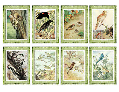 Song Birds - Digital Collage Sheet - Vintage - Printable - 8 Images - 2.5 x 3.5 (Art Images Collage Sheet)