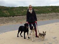 Bournemouth 4 Paws - Dog Walking and Pet Sitting