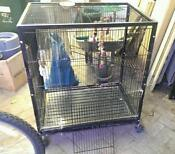 Chinchilla Degu Cage
