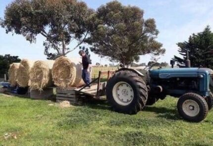 LARGE GRASS HAY BALES FOR SALE