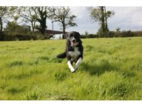 Wanted 1-3 acre field to rent in Craigavon area.