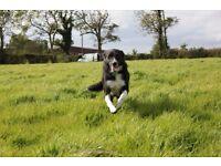 Seeking 1-3 acre field to rent in Craigavon area.