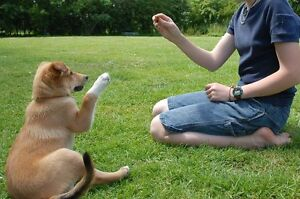 Puppy Obedience Class: S.T.A.R.T. Great Beginnings London Ontario image 7