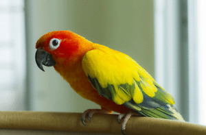 Loving forever home - years of bird experience
