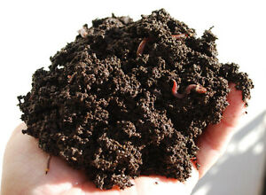 ---Red Wigglers Vermcompost Starter Kit --- Cambridge Kitchener Area image 5