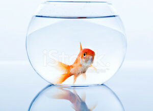 Looking for fishtank to give away to save fishes