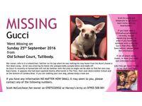 Missing stolen