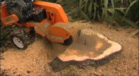 Tree Service Stump Removal