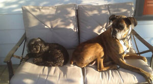 $20 OFF Pet Sitting in Stratford! Stratford Kitchener Area image 2