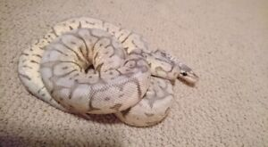 REDUCED** Snake Collection must go