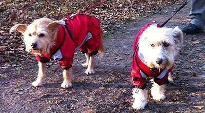 Regenmantel für Weibchen*RED LUNA *Regenmantel,Hundemantel, dogszone mit D-Ring