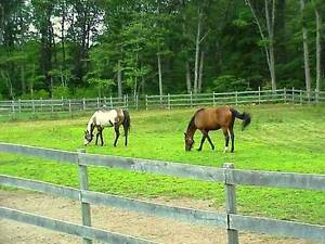 Looking For Hobby Farm / Country Property