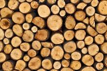 FIREWOOD LOGS - IRONBARK Kingston Logan Area Preview