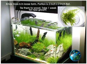 Xmas moss aquarium fish tank 55 75 90 100 125 gallon a1 for 125 gallon fish tank for sale