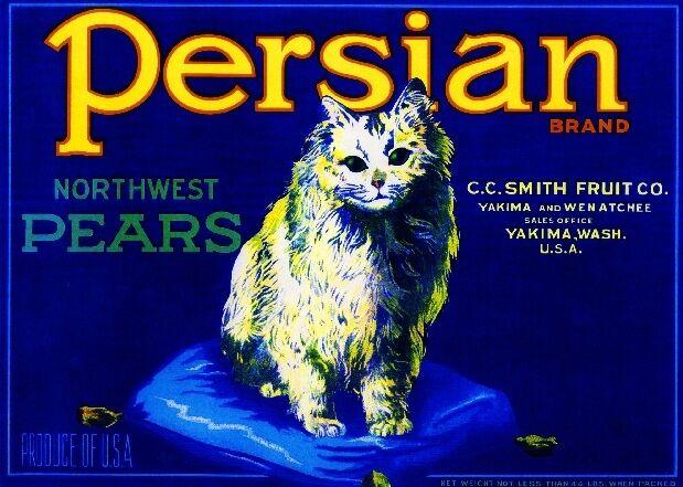 Yakima Washington State White Persian Kitten Cat Pear Fruit Crate Label Print