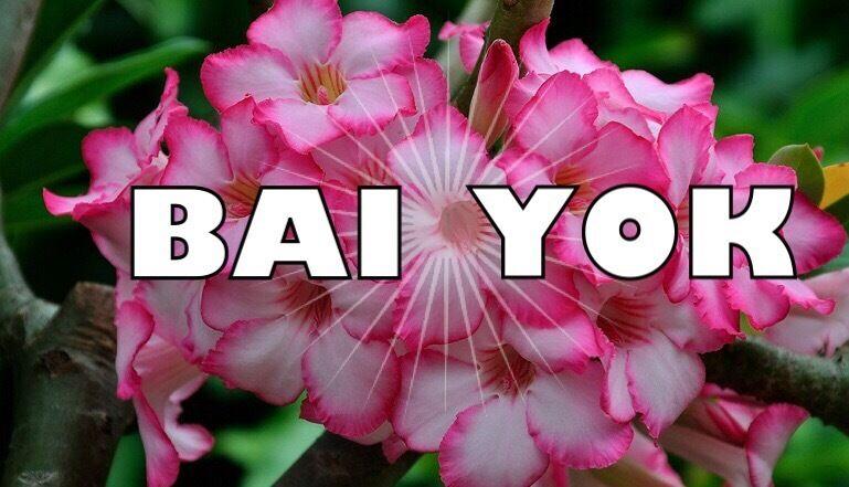 BaiYok Thai Massage , Bury , Manchester