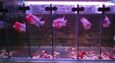5pcs X Black Plastic Divider Sheet Holder Suction Cups for Aquarium Fish Tank BW