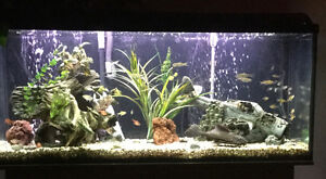 Aquarium 60gallons+meubles