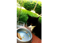 Found black & white cat