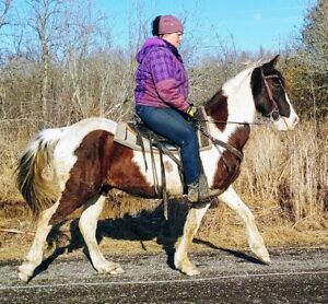 6 Wonderful Trail Horses For Sale! - Welcome!