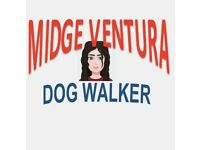MIDGE VENTURA | Dog Walker & Pet Sitter 7 Days A Week | Lewisham Borough