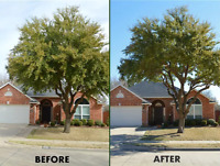 Tree removal 647-704-0175