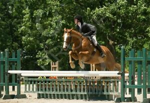 English riding lessons both recreation and show team programs Kingston Kingston Area image 3