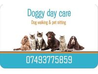 Dog walking services and pet sitting services. Cats, dogs, small animals and exotics accepted