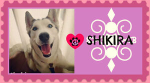 I'M SHIKIRA, I'M AN ACTIVE GIRL IN NEED OF FOSTER/FOREVER HOME