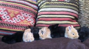 Adorable baby Bunnies!