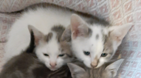 Kitten one boy one girl