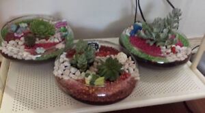 Smart gift for all occasions. Colorful succulents