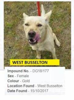 Wanted: FOUND pets  - Busselton & surrounds