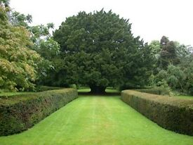Hedge Trimming and Garden / Property Services - Gardener