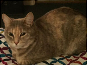 Lost cat Windsor Downs Hawkesbury Area Preview