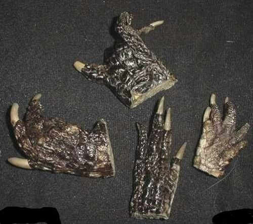 LOT OF 4 REAL GATOR ALLIGATOR FEET TAXIDERMY claw toes Genuine Authentic