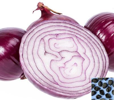 Onion Yellow Spanish Sweet 1500 seeds 5gram/0,18oz Alium cepa vegetable #828