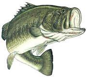 Bass Decal